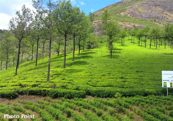 Photo Point, Munnar - Karthi Travels | Katpadi - Munnar & Vagamon Tour
