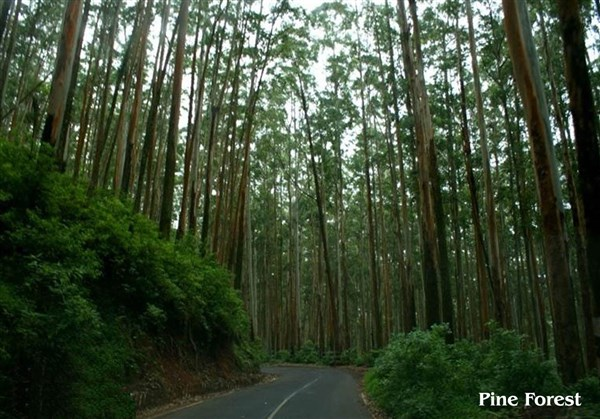 Ooty & Masinagudi All Inclusive 3 Days Tour Package from Arni to Arni.
